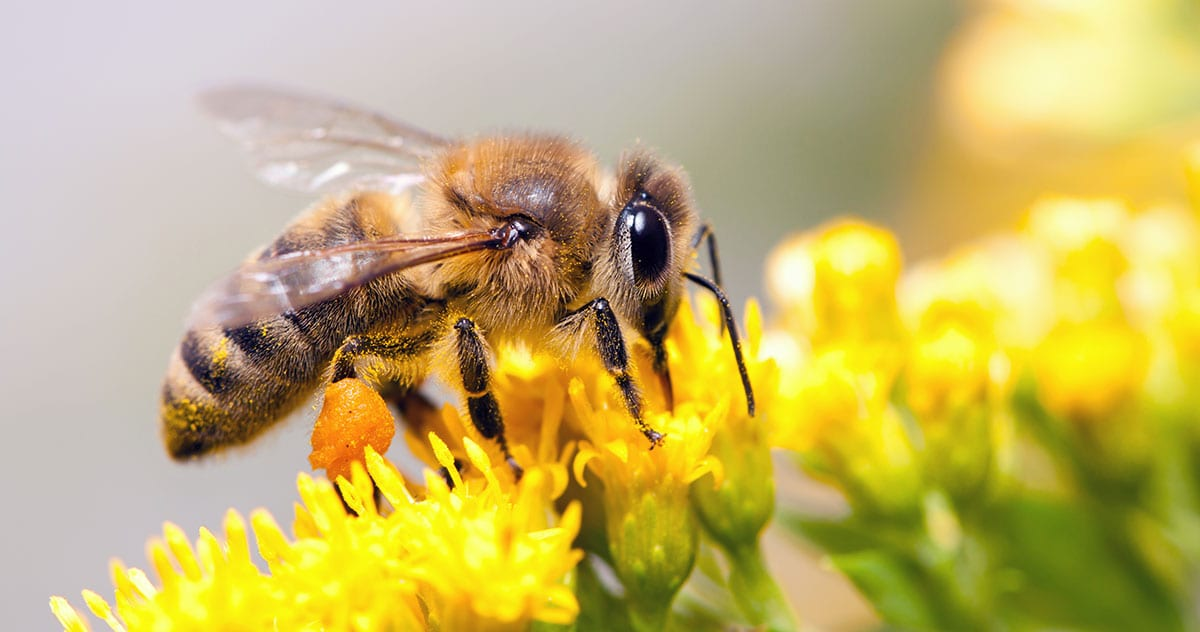 What To Do If You Find Bees In Your Yard